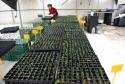 Detalle de las plantas de rápido crecimiento