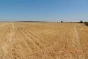 Zona A cosechada