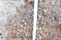 Desarrollo de la raíz profundidad 20-30cm