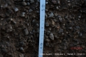 Desarrollo de la raíz profundidad 30-40cm