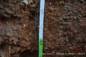 Desarrollo de la raíz profundidad 50-60cm