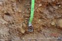 Desarrollo de la raíz profundidad 70-80cm
