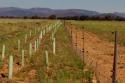 Agroforestales en Ayoó de Vidriales