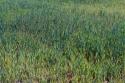 Cereales en Ayoó de Vidriales