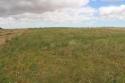 Alfalfa en la parcela experimental de San Mateo de Gállego, LIFE Operación CO2