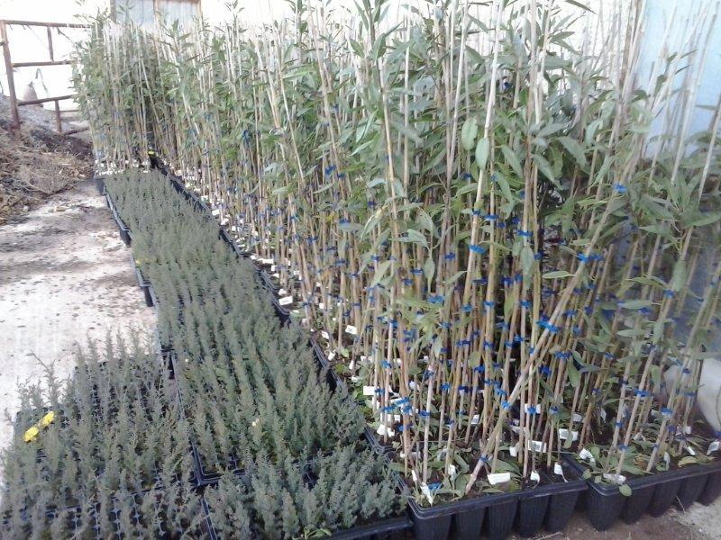 Labores de plantaci n en san mateo parte ii operaci n co2 for Viveros fuenteamarga