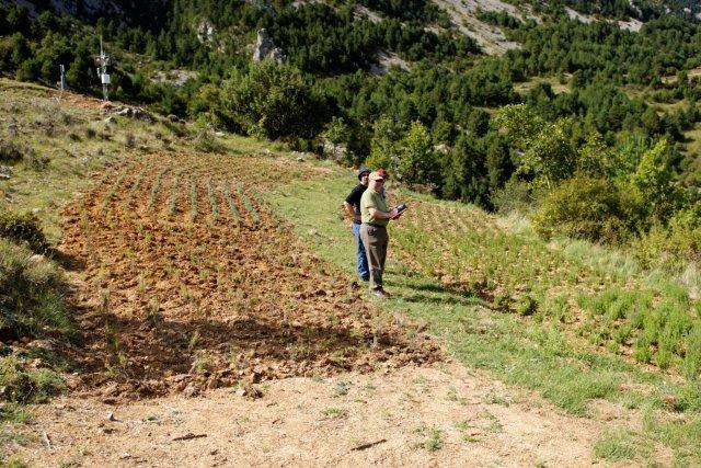 Monitoreo de la uva y la fundaci catalunya la pedrera en for Viveros fuenteamarga