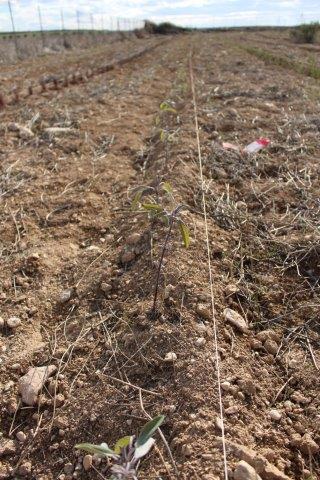 T cnica innovadora de plantaci n en san mateo operaci n co2 for Viveros fuenteamarga
