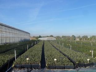 Valiosa visita a las instalaciones de Viveros Fuenteamarga en Valladolid.