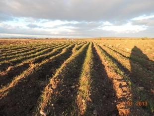 Comparación de la germinación entre dos campos