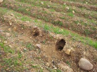 Toma de muestras de suelo en Ayoó