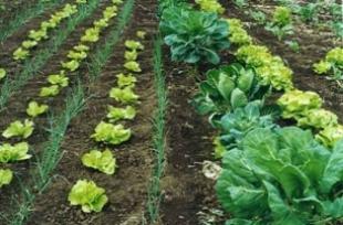 Reconciliando la agricultura con la conservación de la biodiversidad
