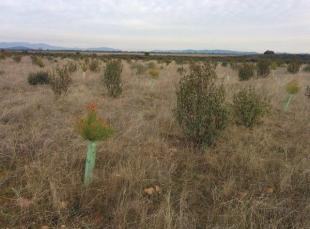 Visita de campo, monitorización de cultivos, muestreo de suelo y reunión de socios en Zona B Ayoó de Vidriales